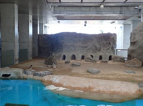 180722長崎ペンギン水族館55コガタペンギン舎.JPG