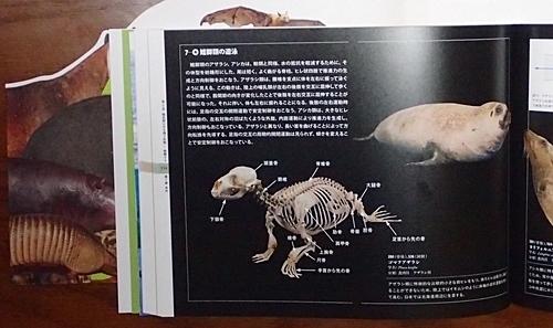 1904 科博_哺乳類展2_99図録a.JPG