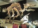 1907科博_恐竜博2019_00 サウロロフス2014(32).JPG