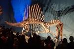 1907科博_恐竜博2019_00 スピノサウルス2016(67).JPG
