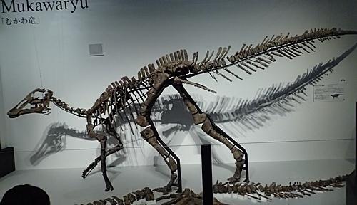 1907科博_恐竜博2019_01 (157)むかわ竜_全身復元.JPG