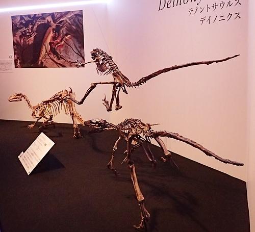 1907科博_恐竜博2019_05 (43)テノントサウルス・ディノニクス後.JPG