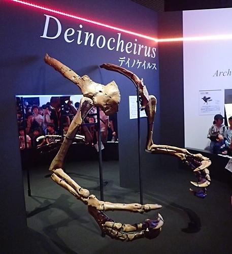 1907科博_恐竜博2019_07(59)デイノケイルス_前肢_腕.JPG