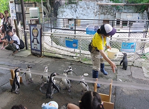 190825 小諸市zoo17_0817p (112)フンボルトペンギン_流しアジ横から.JPG