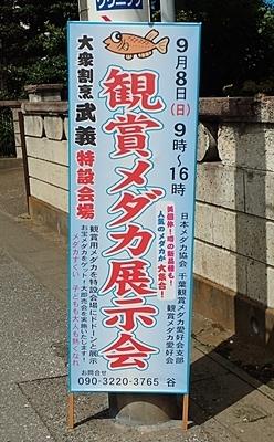 190909 鑑賞メダカ展示会_松戸秋_01_0908  (641)立て看板.JPG