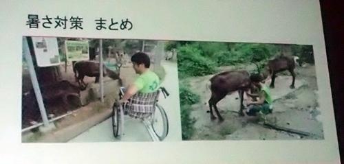 191208エンリッチメント大賞036_1207  (123)スライド_大森山動物園_トナカイ_ダメージ.JPG