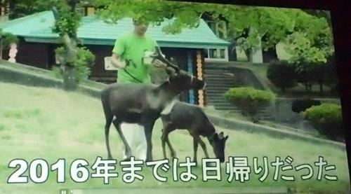 191208エンリッチメント大賞037_1207  (139)スライド_大森山動物園_トナカイ_放牧.JPG