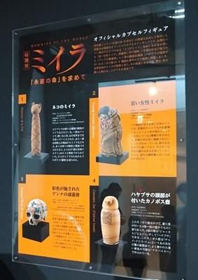 191215科博ミイラ展55_191215s (5)gacha.JPG