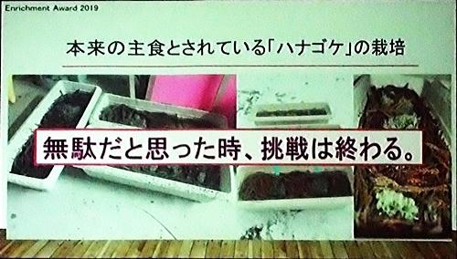 191228エンリッチメント大賞_15_1207 (108)スライド_大森山ハナゴケ栽培.JPG