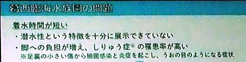 191231エンリッチメント大賞051_1207 (191)スライド_葛西臨海水族園_海鳥_genzainomondai.JPG