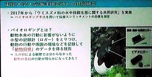 191231エンリッチメント大賞054_1207 (198)スライド_葛西臨海水族園_海鳥_biologing.JPG