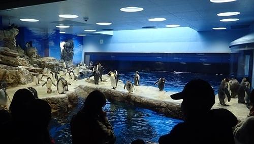 200314_110しものせき海響館0209o (65)ペンギン村_亜南極ゾーン.JPG