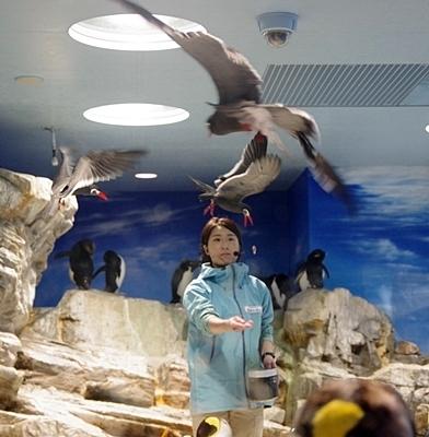 200314_121しものせき海響館0209p (21)ペンギン大編隊_第1部_インカアジサシのホバリング.JPG