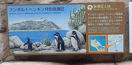 200322_02 海響館0209o (11)フンボルトペンギン特別保護区 掲示.JPG