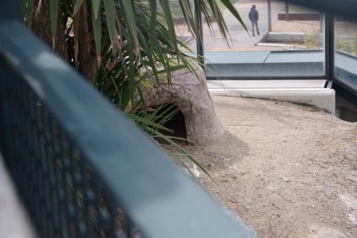 200322_08 海響館0209p (110)フンボルトペンギン特別保護区_ひながいる巣.JPG