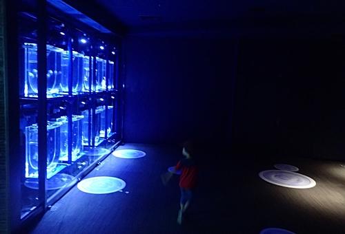 200628すみだ水族館_04_0624o (8)新施設ビッグシャーレ_予定スペース.JPG