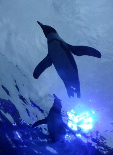 200629サンシャイン水0612R (180)天空のペンギン.jpg