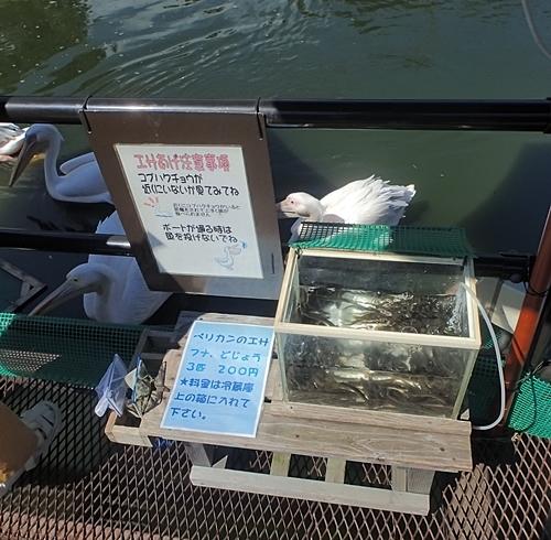 200823 伊豆シャボテン公園-31_0813o (36)ペリカンのえさ.JPG