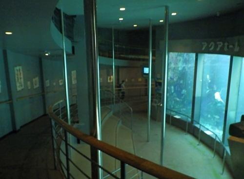 200922 下田海中水族館06_0814R (2)アクアドームペリー号内部水槽.JPG