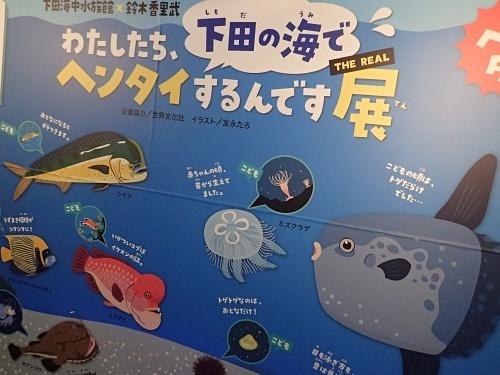 200922 下田海中水族館07_0814o (26)私たち下田の海でヘンタイするんです展.JPG