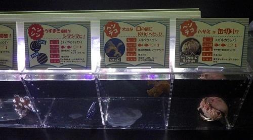 200922 下田海中水族館08_0814R (24)私たち下田の海でヘンタイするんです展_メガネカラッパ.JPG