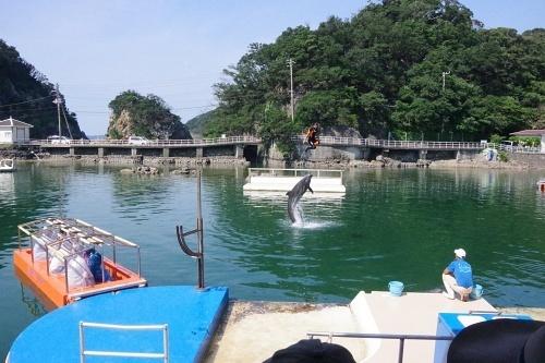 200922 下田海中水族館10_0814p (17)湾内イルカショー.JPG