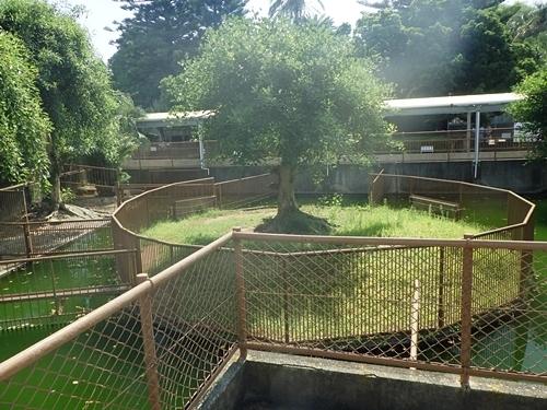 2009熱川バナナワニ園21_0813R (52)分園_ワニ放流池.JPG