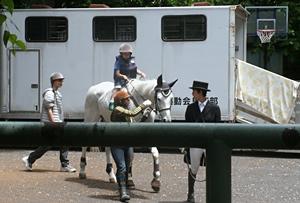 2013 五月祭20 乗馬部.JPG