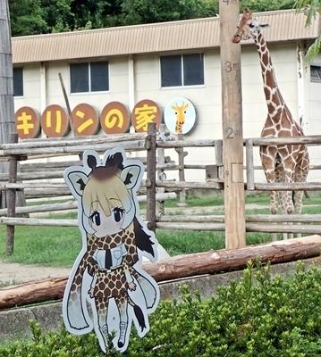 みさき公園1708_05キリン&けもフレ看板.JPG
