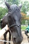 ノーザンホースパーク160711-2 引き馬グスタフup.JPG