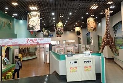多摩動物公園_ネコ展.JPG