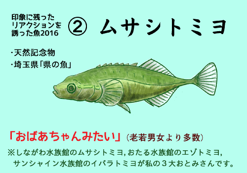 推し魚2016_2_ムサシトミヨ.png