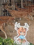 東武動物公園アクシスジカ&看板.JPG