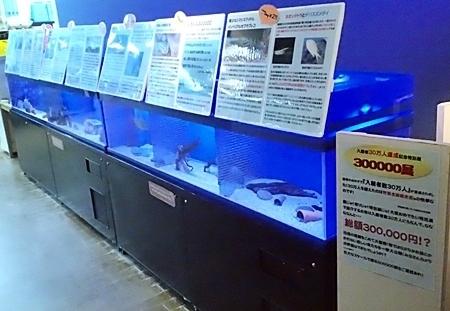 竹島水族館160225 30万展.JPG