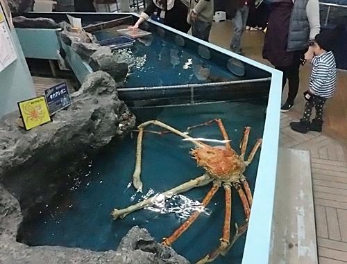 竹島水族館160225 タッチプール.JPG