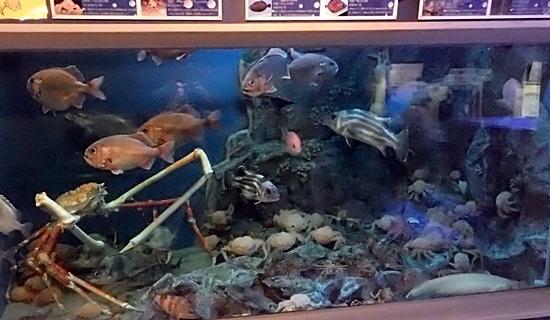 竹島水族館160225 深海大水槽.JPG