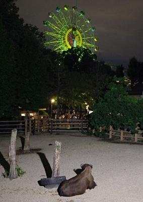 s170818東山動物園ナイト30アメリカバイソンと観覧車.JPG